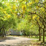 即時熱門文章:【南投阿勃勒】中興新村阿勃勒三大賞點公開~夏天是屬於黃色的繽紛世界!