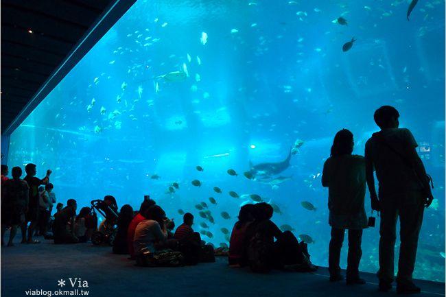 【新加坡觀光景點】新加坡SEA海洋館~全球最大的海洋館約會去! @Via's旅行札記-旅遊美食部落格