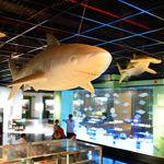 即時熱門文章:《13遊記》嘉義市立博物館~小心長毛象和白鯊出沒身邊!!