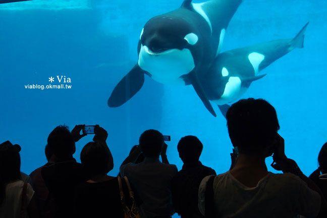 【名古屋景點推薦】名古屋港水族館~大人氣的虎鯨、小白鯨、企鵝、海豚等你來玩! @Via's旅行札記-旅遊美食部落格
