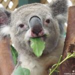 即時熱門文章:【雪梨自由行】雪梨一日遊DayTour(上):Featherdale wildlife park超精彩必遊動物園