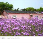 即時熱門文章:【桃園景點一日遊】親子旅遊景點~青林農場‧紫色馬鞭草花海無敵浪漫!