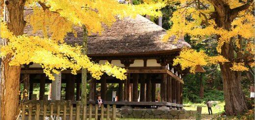 【福島喜多方景點】新宮熊野神社~八百多年大銀杏樹!值得一賞的秋季銀杏美景! @Via's旅行札記-旅遊美食部落格