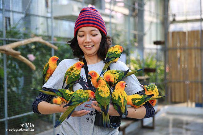 【靜岡景點推薦】掛川花鳥園~愛鳥人&親子旅行大推薦!超有趣的花鳥園~玩到不想走! @Via's旅行札記-旅遊美食部落格