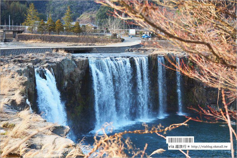 【九州景點】大分旅遊景點~原尻瀑布/東方版的尼加拉瓜大瀑布!春季還有鬱金香花海! @Via's旅行札記-旅遊美食部落格