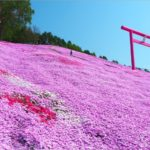 即時熱門文章:【北海道旅遊】網走|大空町東藻琴芝櫻公園~絕美的粉紅國度!一生一定要看一次的美景!