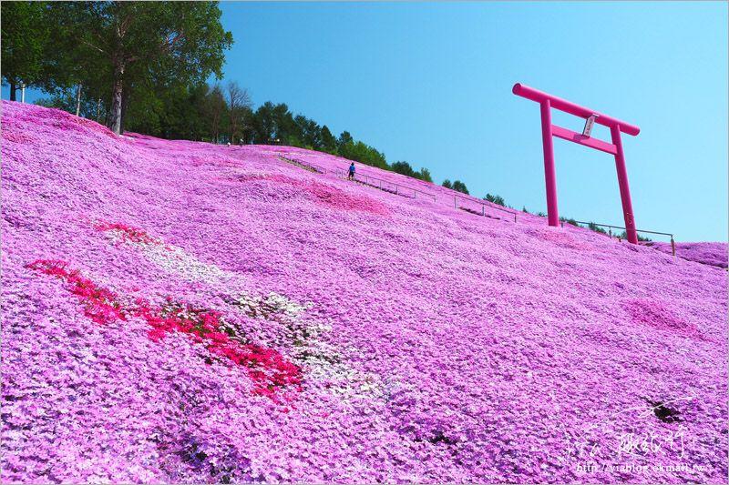 【北海道旅遊】網走|大空町東藻琴芝櫻公園~絕美的粉紅國度!一生一定要看一次的美景! @Via's旅行札記-旅遊美食部落格