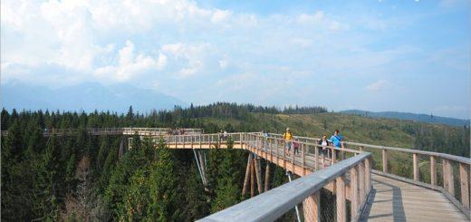 【斯洛伐克自由行】Treetop walk Bachledka~森林中樹頂步道,挑戰心臟之餘又有美景相伴的新景點! @Via's旅行札記-旅遊美食部落格