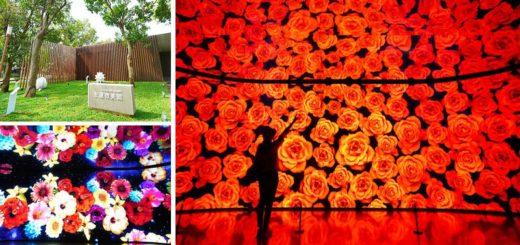 【台中花博后里森林園區】友達微美館~IG打卡景點!萬花筒般的花朵牆超夢幻~森林園區必逛的超美展館! @Via's旅行札記-旅遊美食部落格