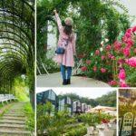 即時熱門文章:【苗栗景點】雅聞七里香玫瑰森林~上萬株玫瑰相伴的浪漫森林!秘探世界玫瑰花園旅行去!
