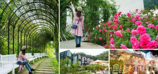 【苗栗景點】雅聞七里香玫瑰森林~上萬株玫瑰相伴的浪漫森林!秘探世界玫瑰花園旅行去! @Via's旅行札記-旅遊美食部落格