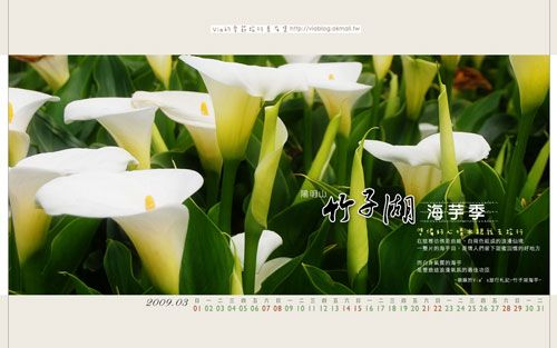 【好友限定】2009年三月份旅行桌布-竹子湖海芋 @Via's旅行札記-旅遊美食部落格