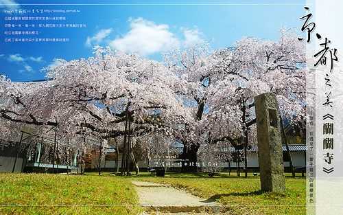 【好友限定】2009年四月份旅行桌布-京都櫻花桌布 @Via's旅行札記-旅遊美食部落格