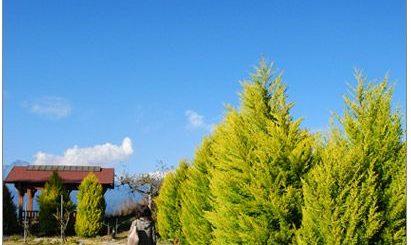 【中部旅遊景點】福壽山農場踏青去~ @Via's旅行札記-旅遊美食部落格