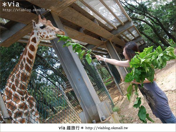 關西六福莊》精彩秘探野生動物園/DIY手作/農趣樂~! @Via's旅行札記-旅遊美食部落格