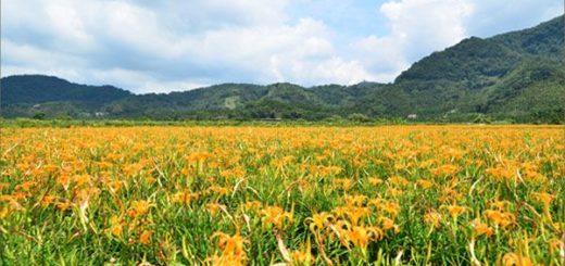 【日月潭金針花】什麼?會跳舞的金針花,就在南投日月潭!!! @Via's旅行札記-旅遊美食部落格