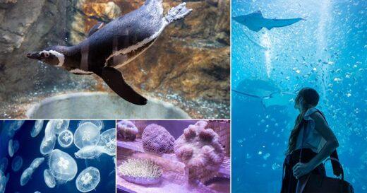 【桃園Xpark水族館】青埔八景島水族館 Xpark都會型水生公園~2020年8月7日隆重開幕,亮點搶先看!! @Via's旅行札記-旅遊美食部落格