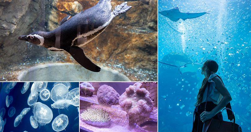 桃園Xpark水族館》青埔八景島水族館 Xpark都會型水生公園~2020年8月7日隆重開幕,亮點搶先看!! @Via's旅行札記-旅遊美食部落格