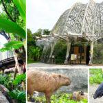 即時熱門文章:【台北市立動物園】最新熱帶雨林館~根本侏儸紀公園場景!水豚、樹懶、馬來貘…療癒系動物一次看個夠!