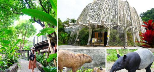 【台北市立動物園】最新熱帶雨林館~根本侏儸紀公園場景!水豚、樹懶、馬來貘…療癒系動物一次看個夠! @Via's旅行札記-旅遊美食部落格