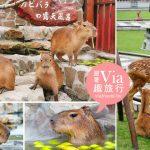 即時熱門文章:【宜蘭景點】張美阿嬤農場~水豚、梅花鹿餵食體驗太療癒!露天風呂水豚這裡拍!
